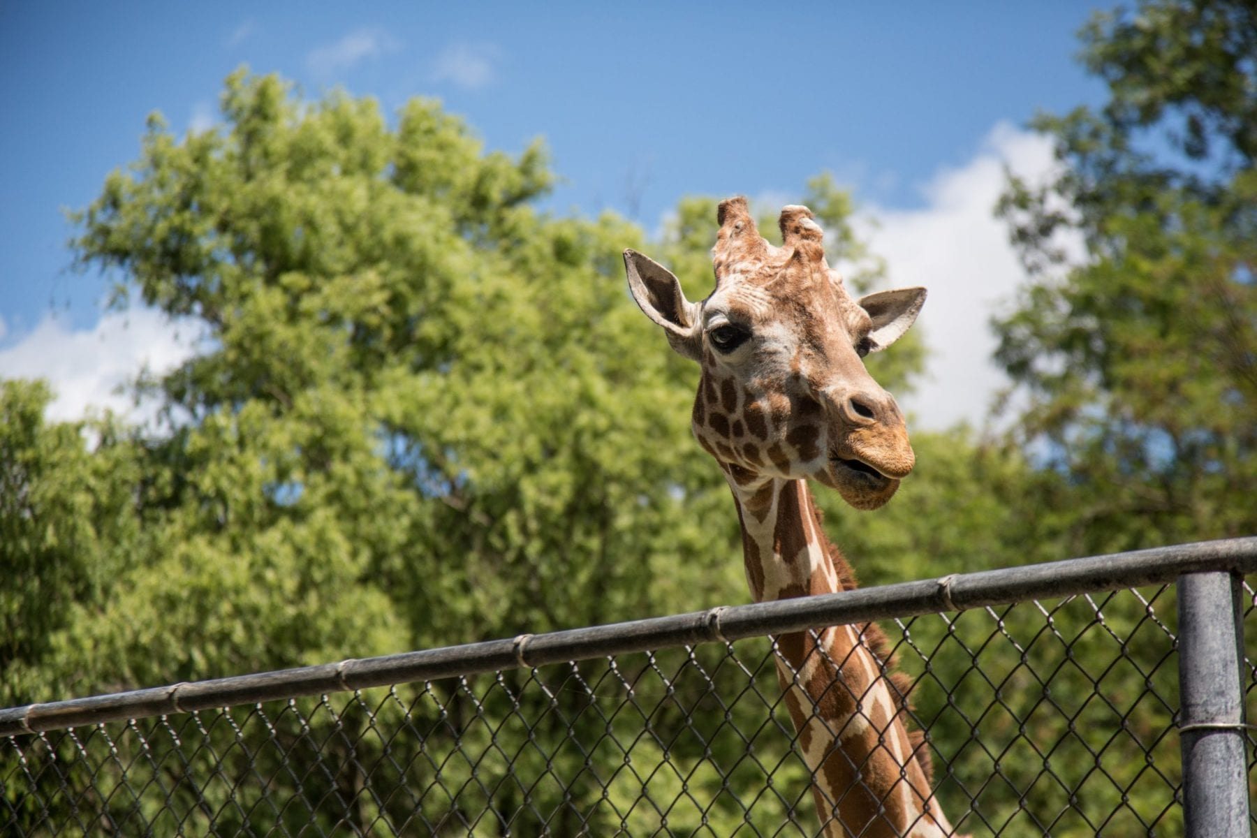 Take a trip to the zoo without needing to leave the house!