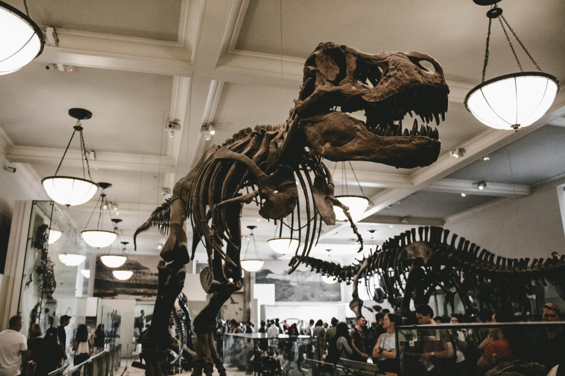 Natural History Museum offers free weekday classes virtually