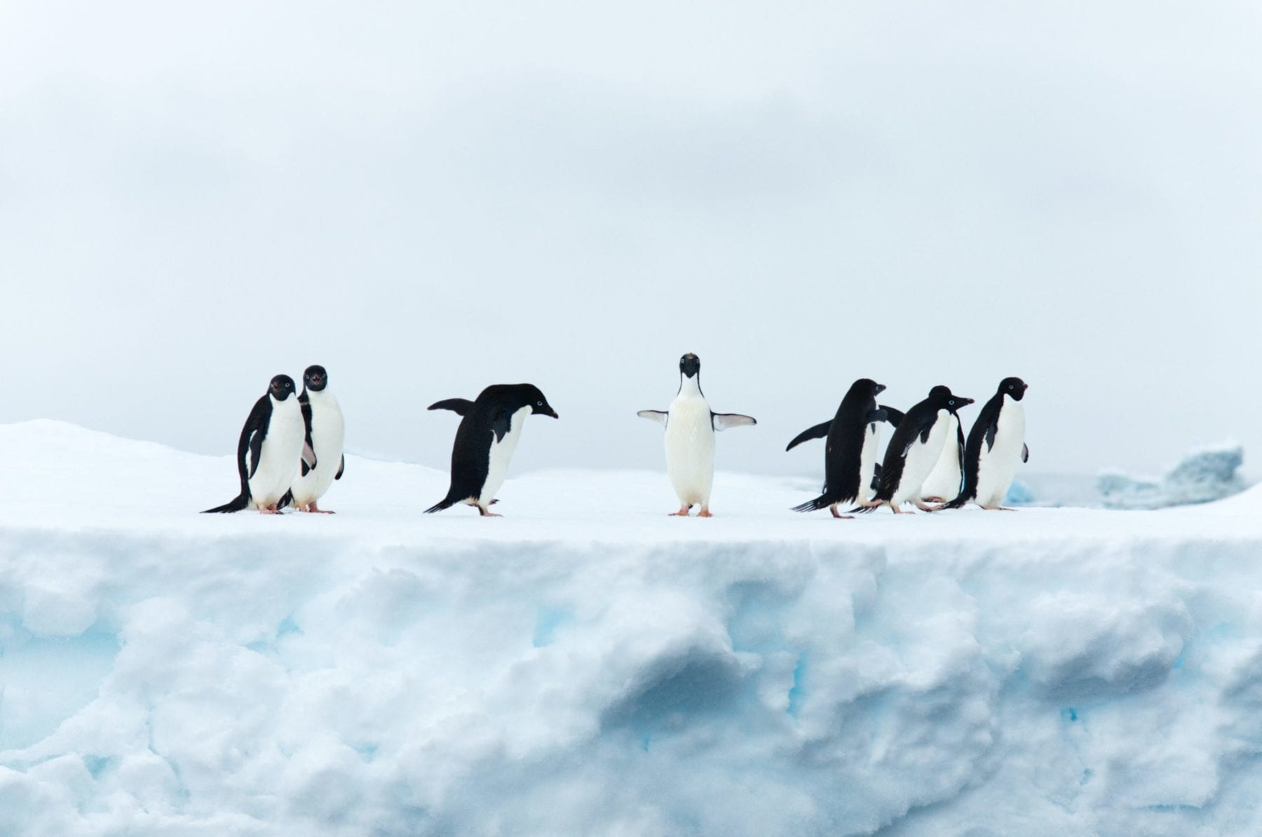Science, math materials about Arctic, Antarctic from National Science Foundation