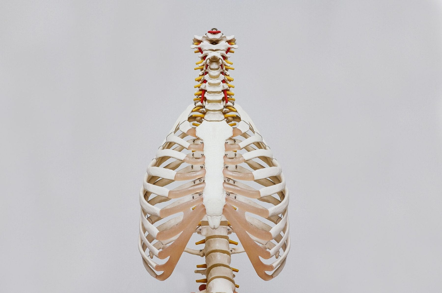 Explore the human body in an interesting and interactive way