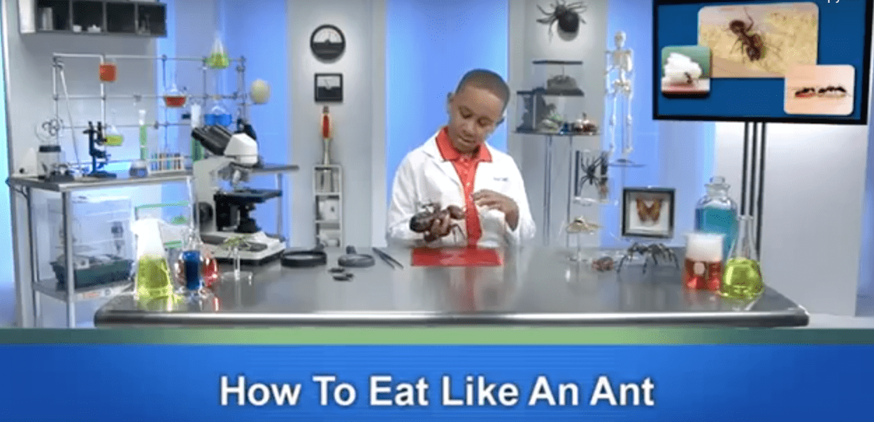 Pest World for Kids offers learning opportunities about little critters