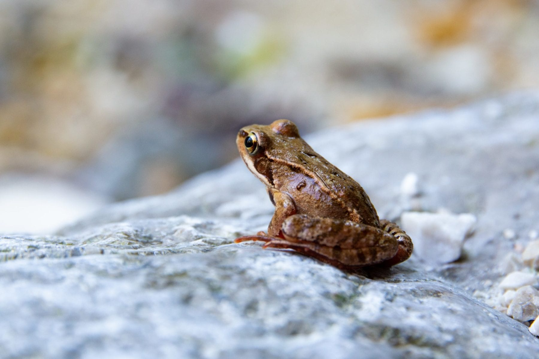 Resources for learning about amphibians